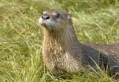 river-otter-02